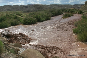 The Caineville Wash west of Hanksville on our way back to Torrey. The wash is normally dry. More signs of weird weather.