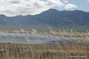 Water in the desert (Kirsten shot)
