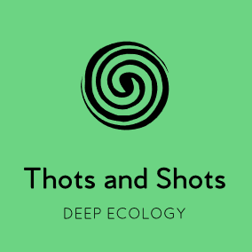 Deep Ecology website title and logo